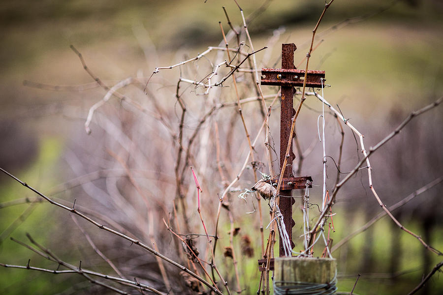 Vineyard Photograph - Vinepost by Mike Lee
