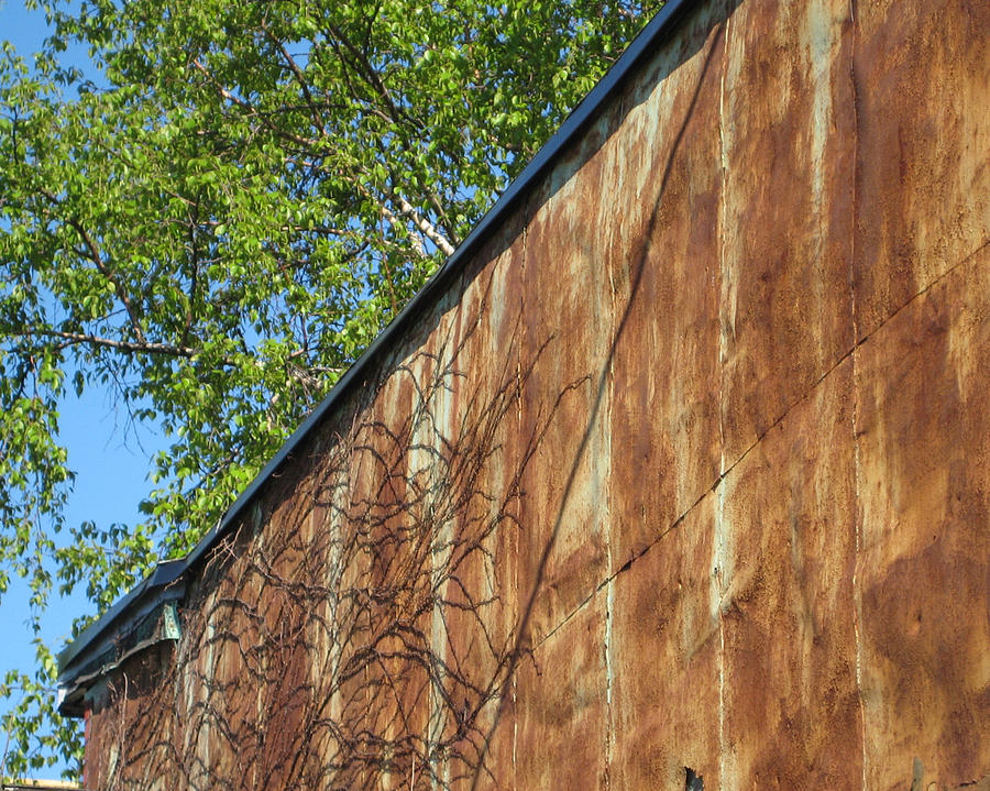 Toronto Photograph - Vines And Rust by Alana Boltwood