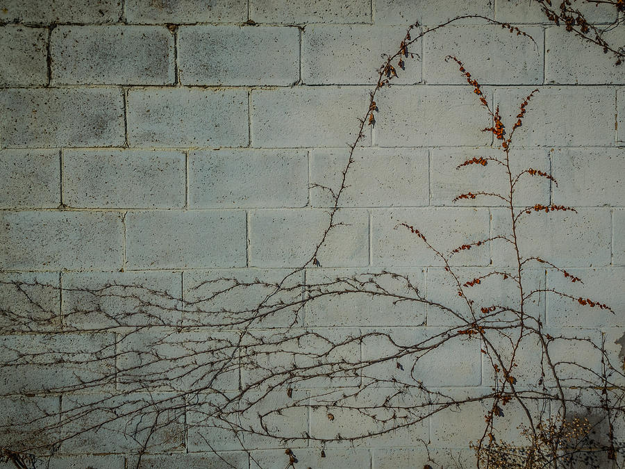 Wall Photograph - Vines by Carl Engman