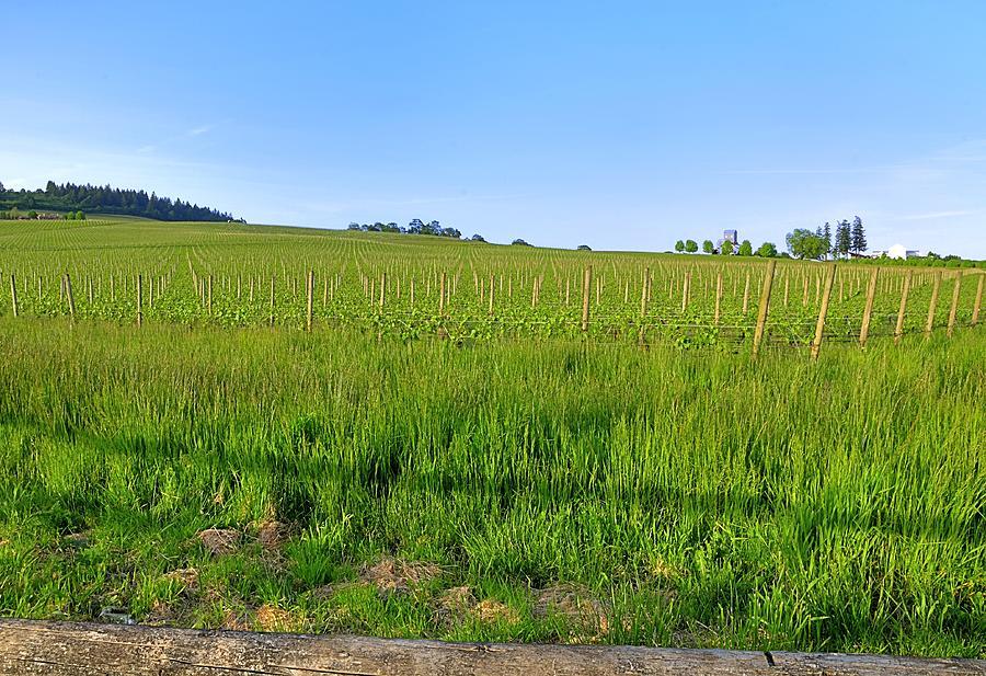 Willamette Photograph - Vineyard 24134 by Jerry Sodorff