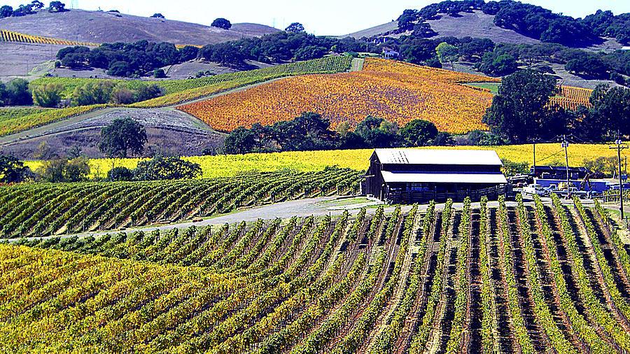 North California Photograph - Vineyard 35 by Xueling Zou