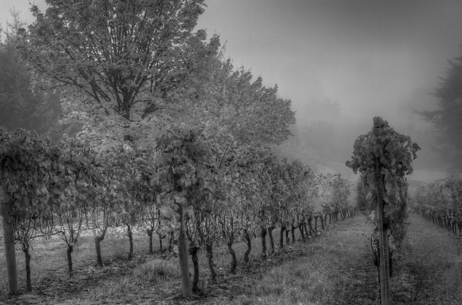 Autumn Photograph - Vineyard Fog by Jean Noren