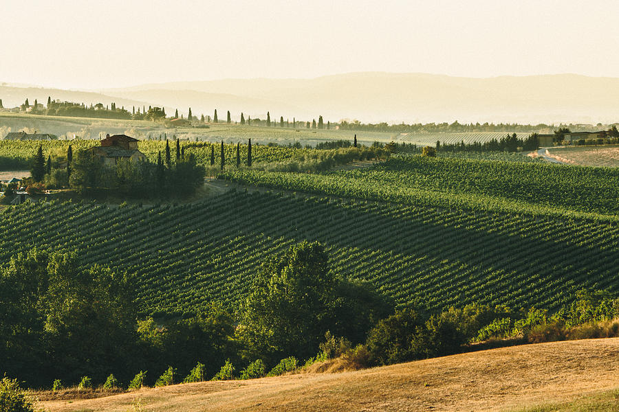 Landscape Photograph - Vineyard From Above by Clint Brewer
