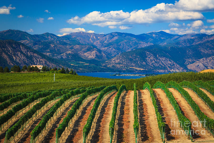 America Photograph - Vineyard In The Mountains by Inge Johnsson