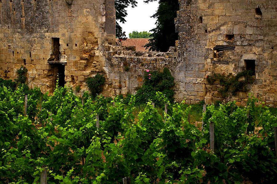 Bordeaux Photograph - Vineyard In The Ruins by Christine Burdine