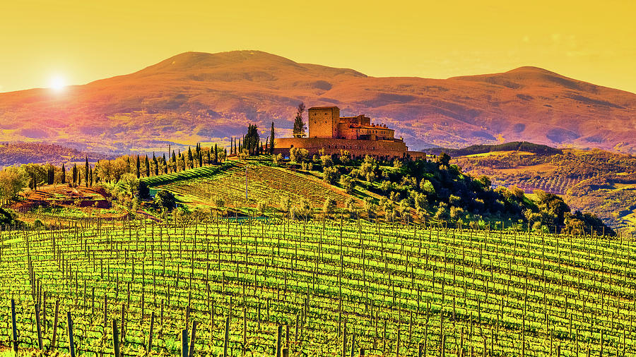 Vineyard In Tuscany Photograph by Deimagine