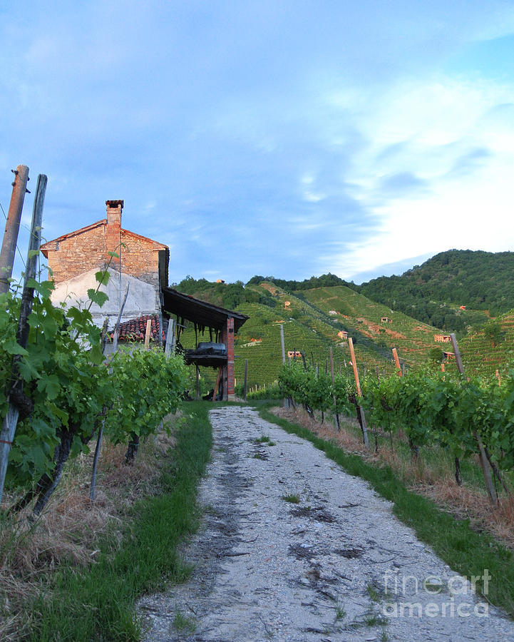 Vineyard Photograph - Vineyard Path by Sarah Christian