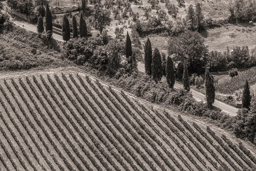 Italy Photograph - Vineyard Road by Clint Brewer