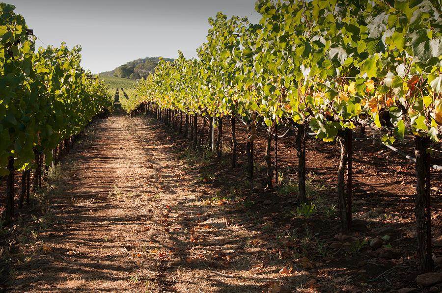Soil Photograph - Vineyard Soil Of Sonoma by Kent Sorensen