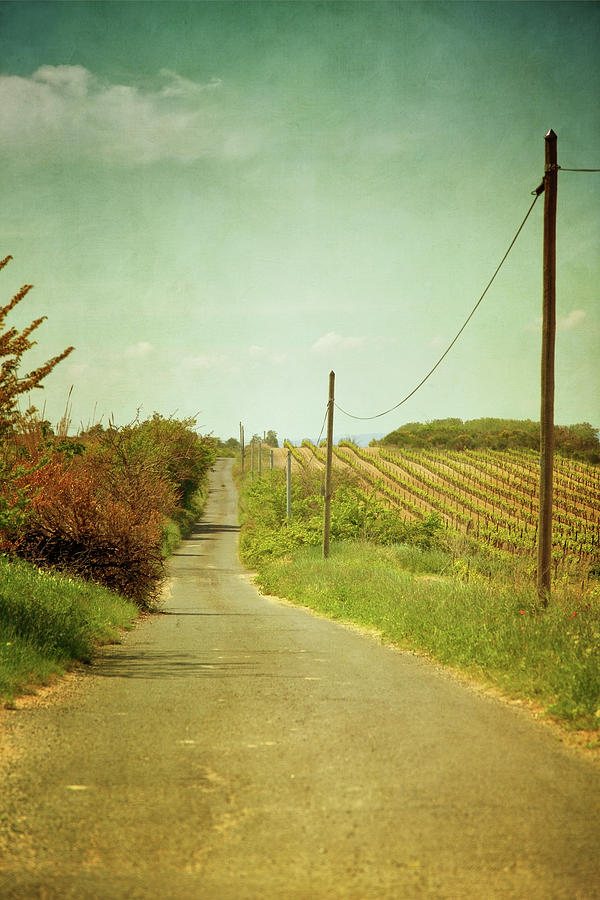 Vineyard With Telephone Polled At Road Photograph by Paul Grand Image
