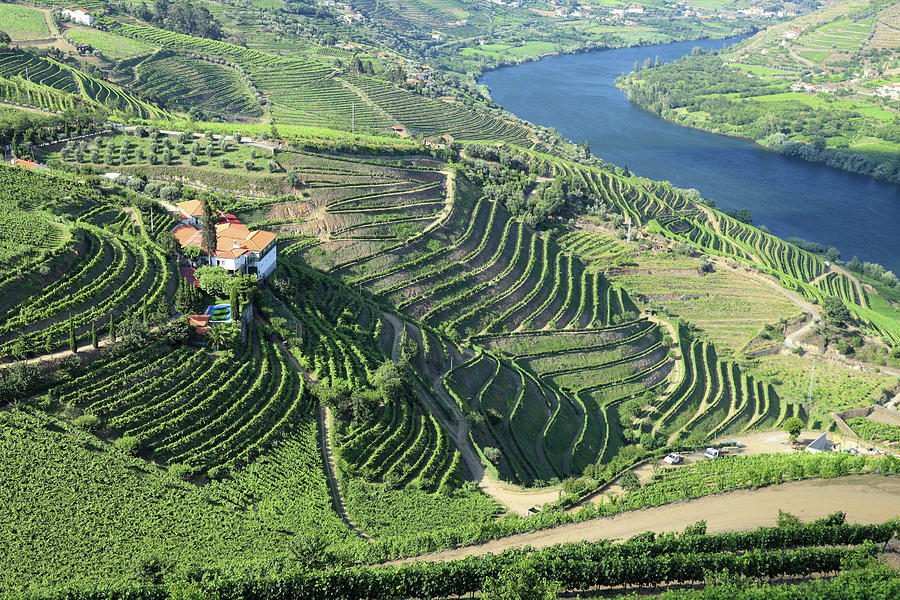 Vineyards In Douro Valley Photograph by Vuk8691