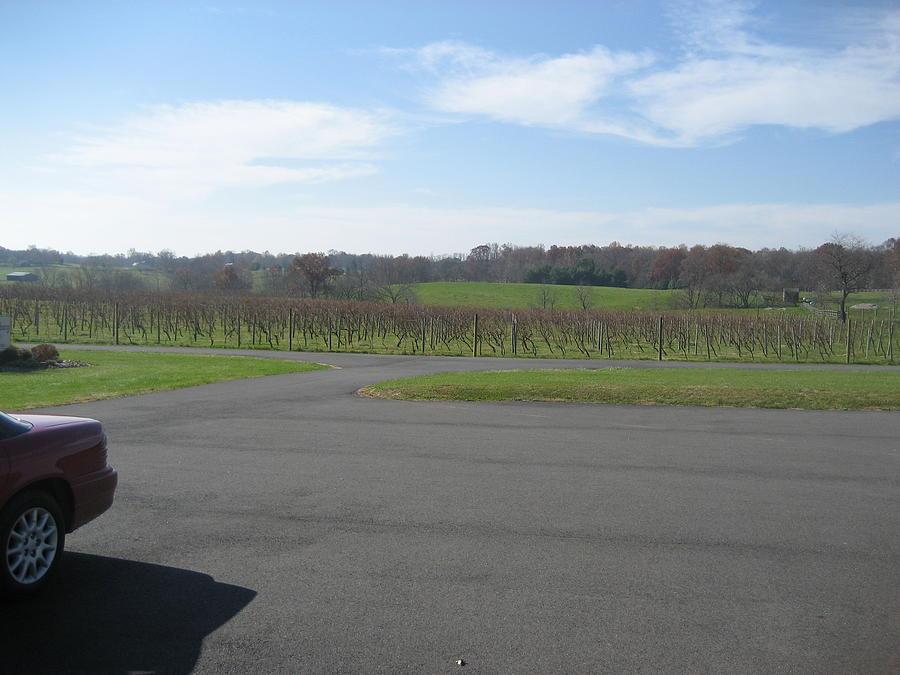 Virginia Photograph - Vineyards In Va - 121230 by DC Photographer