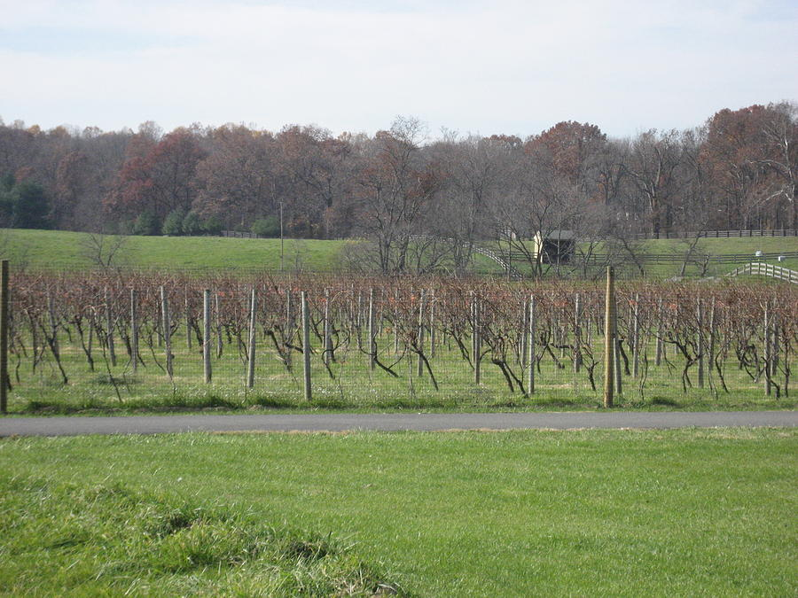Virginia Photograph - Vineyards In Va - 121234 by DC Photographer