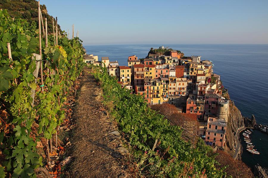 Italy Photograph - Vineyards Of Manarola by Susan Rovira