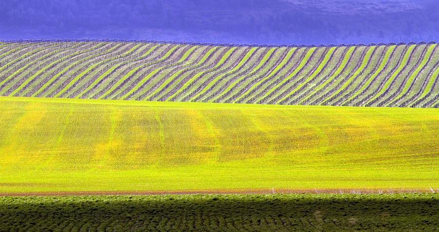 Vineyards Photograph - Vineyards by Rebecca Cozart