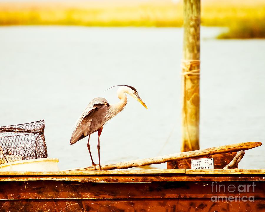 Great Blue Heron Photograph - Vintage Big Blue by Michael McStamp