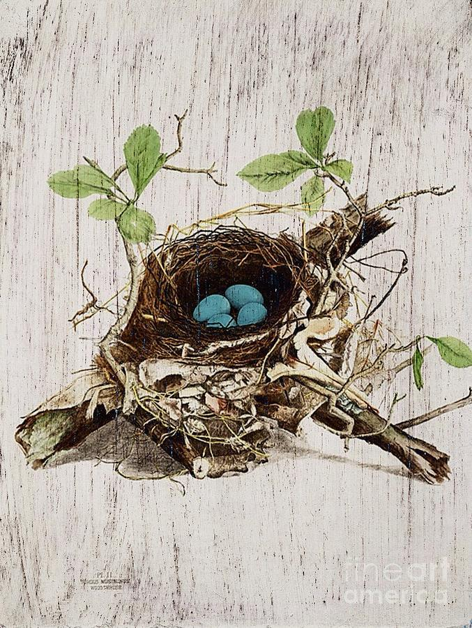 Bird Nest Drawing - Vintage Bird Nest French Botanical Art by Cranberry Sky