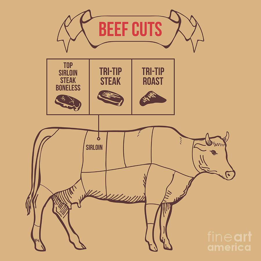Cut Digital Art - Vintage Butcher Cuts Of Beef Scheme by Dimair