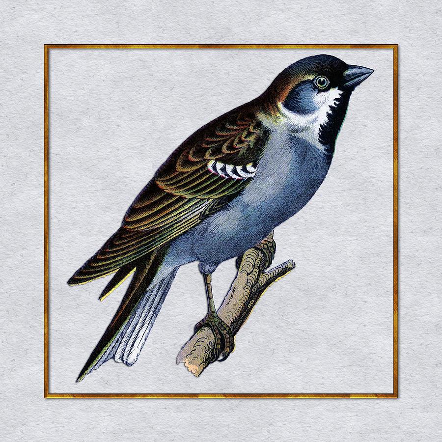 Bird Painting Contemporary Songbird Art Colorful Bird Art -Bird Home Decor Sparrow Portrait Acrylic on Canvas Modern Wall Decor