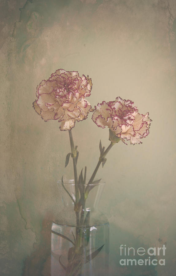 Color Photograph Photograph - Vintage Flowers by Victoria Herrera
