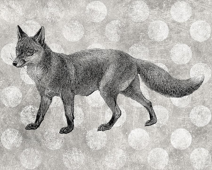 Fox Digital Art - Gray Fox by Flo Karp