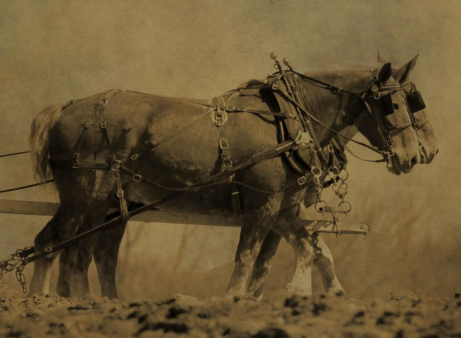 Horse Plow Photograph - Vintage Horse Plow by Dan Sproul