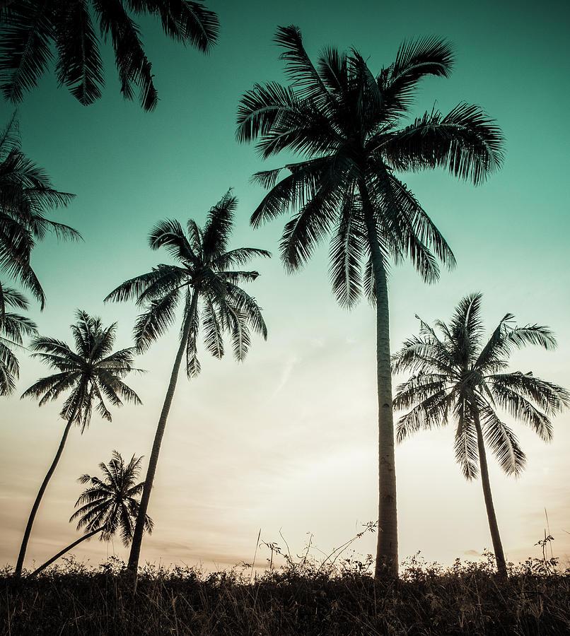Vintage Palm Background Photograph by Std