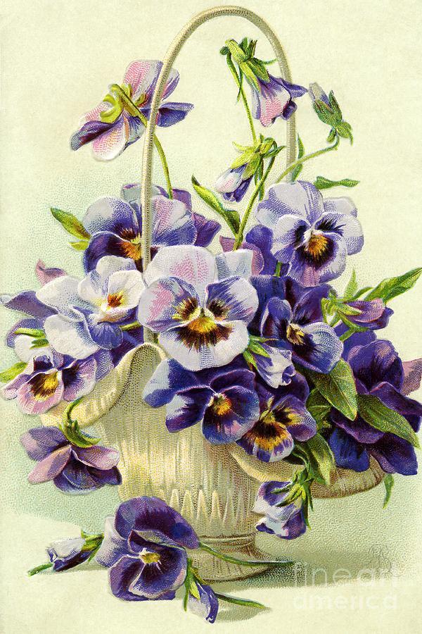 Vintage Pansy Flower Basket Photograph
