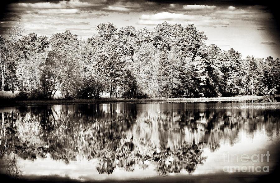 Vintage Photograph - Vintage Pine Barrens by John Rizzuto
