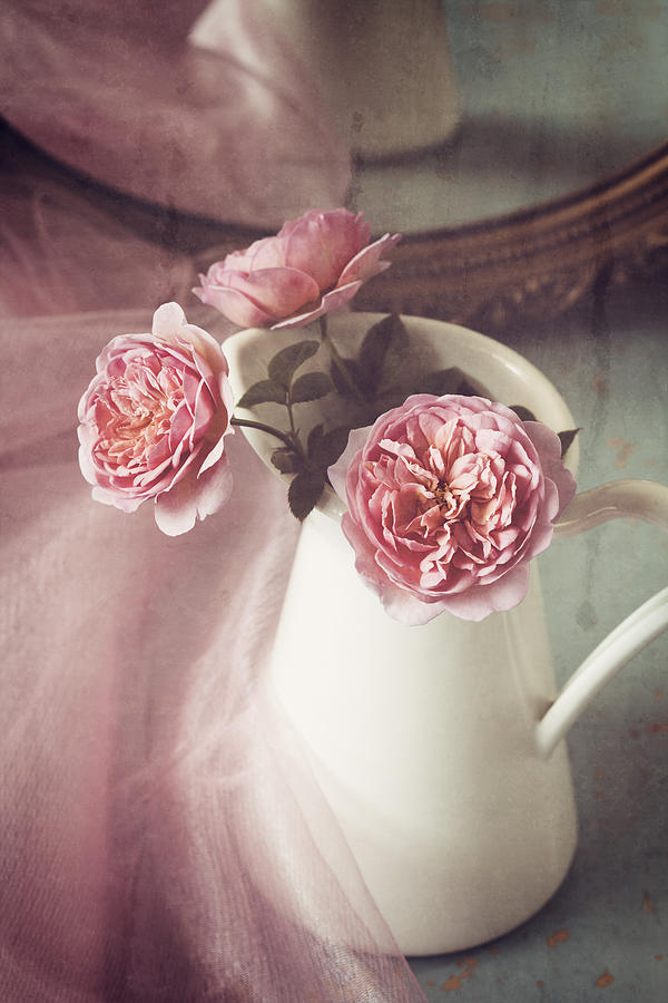Rose Photograph - Vintage Pink by Amy Weiss