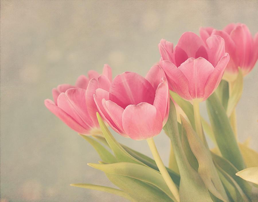 Tulip Photograph - Vintage Pink Tulips by Kim Hojnacki