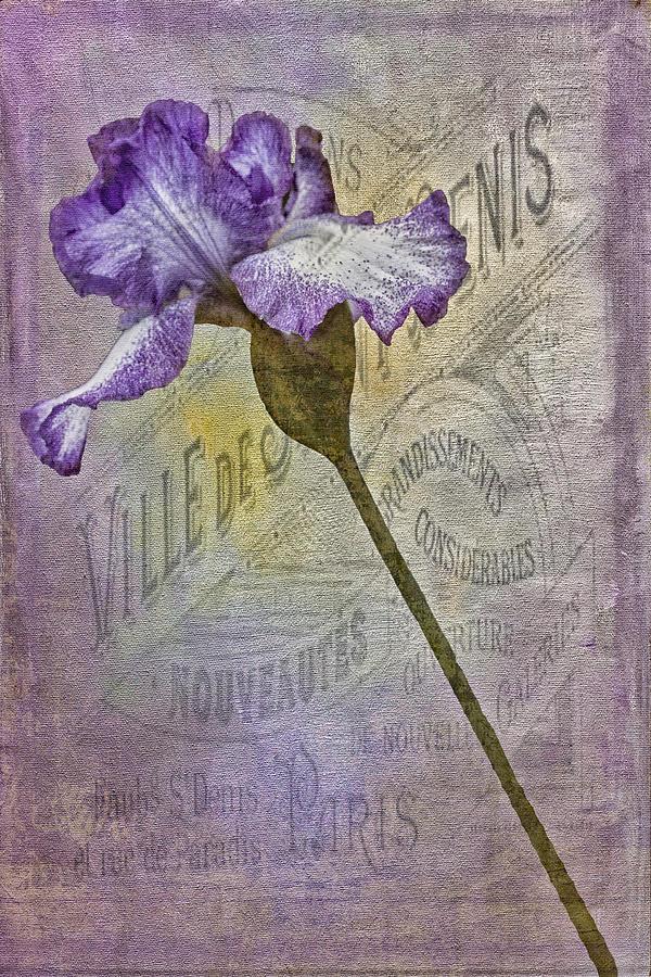 Flora Photograph - Vintage Pourpre Iris by Chanin Green