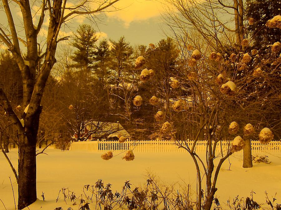 Cottage Photograph - Vintage Snow Blossoms by Elizabeth Tillar