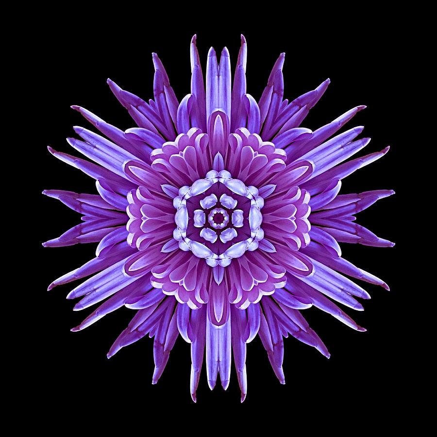 Flower Photograph - Violet Chrysanthemum Iv Flower Mandala by David J Bookbinder