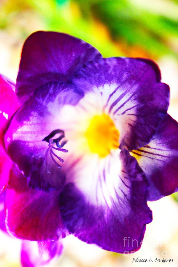 Violet Photograph - Violet Day by Rebecca Christine Cardenas