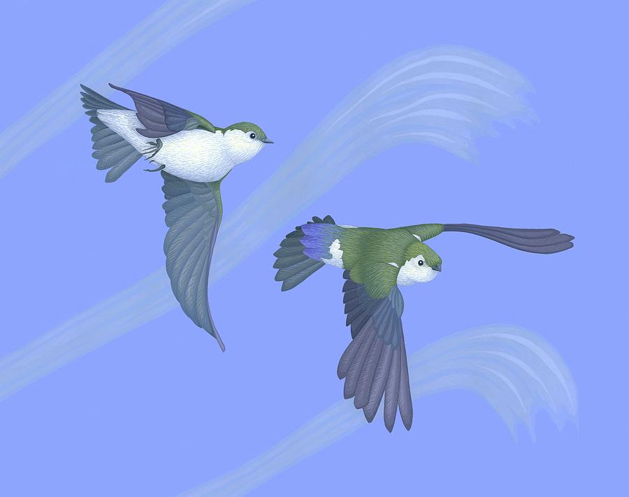 Painting Painting - Violet-green Swallows by Nathan Marcy