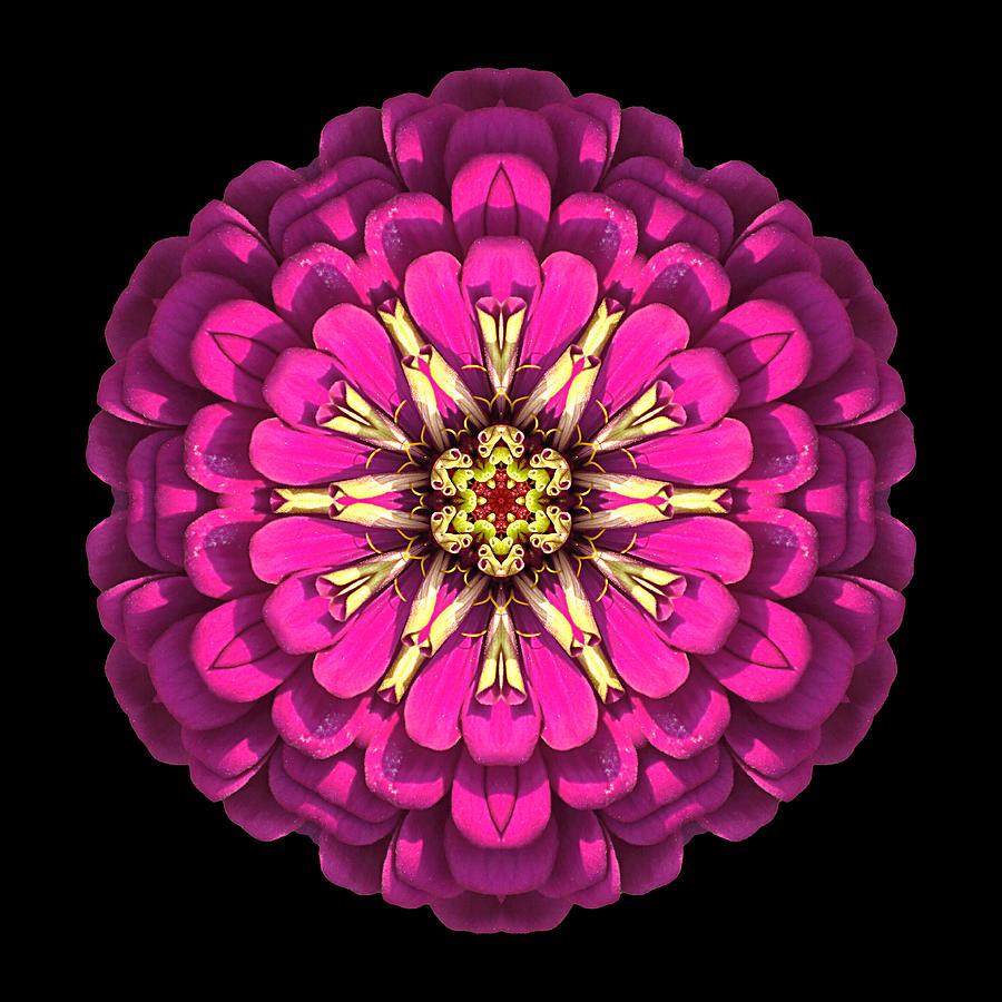 Flower Photograph - Violet Zinnia Elegans Flower Mandala by David J Bookbinder