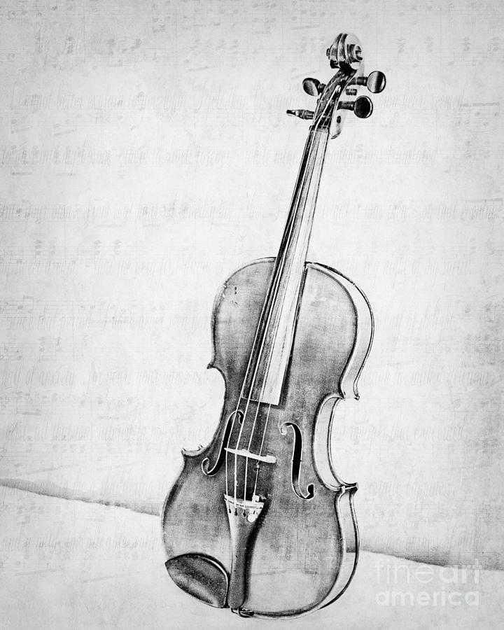 Violin In Black And White Photograph By Emily Kay