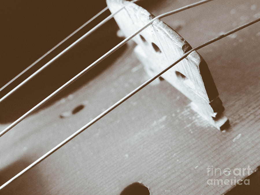Violin Strings by Stacy Michelle Smith