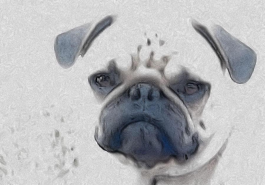 Dog Digital Art - Vito by Cindy Luelling
