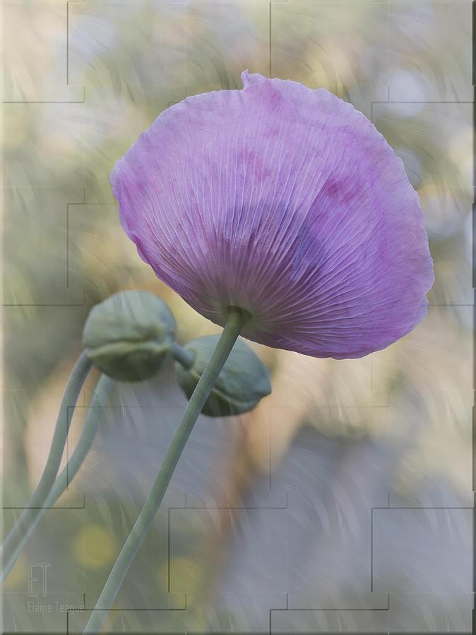 Flowers Photograph - Vivian by Elaine Teague