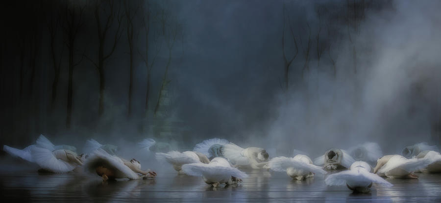 Ballet Photograph - Von Rothbarts Curse by Peet Van Den