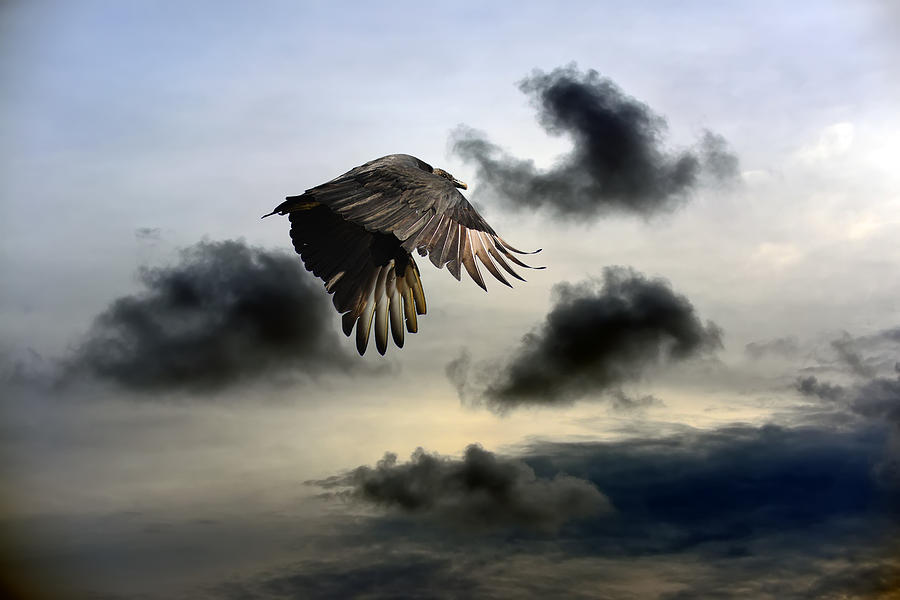 Vulture Sky by Patrick Wolf
