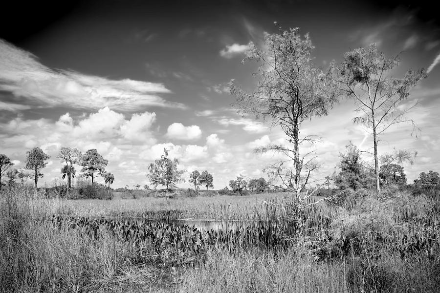 Everglades Photograph - Wagon Wheel Road Bw by Rudy Umans