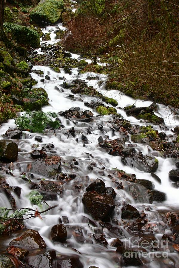 Waterfalls Photograph - Wahkeena Falls by Cari Gesch