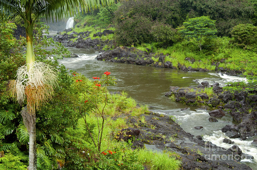 Boiling Pots State Park Big Island Hawaii Parks Wailuka River Rivers Water Falls Waterfall Waterfalls Tree Trees Plants Plants Flower Flowers Landscape Landscapes Waterscape Waterscapes  Photograph - Wailuka River by Bob Phillips