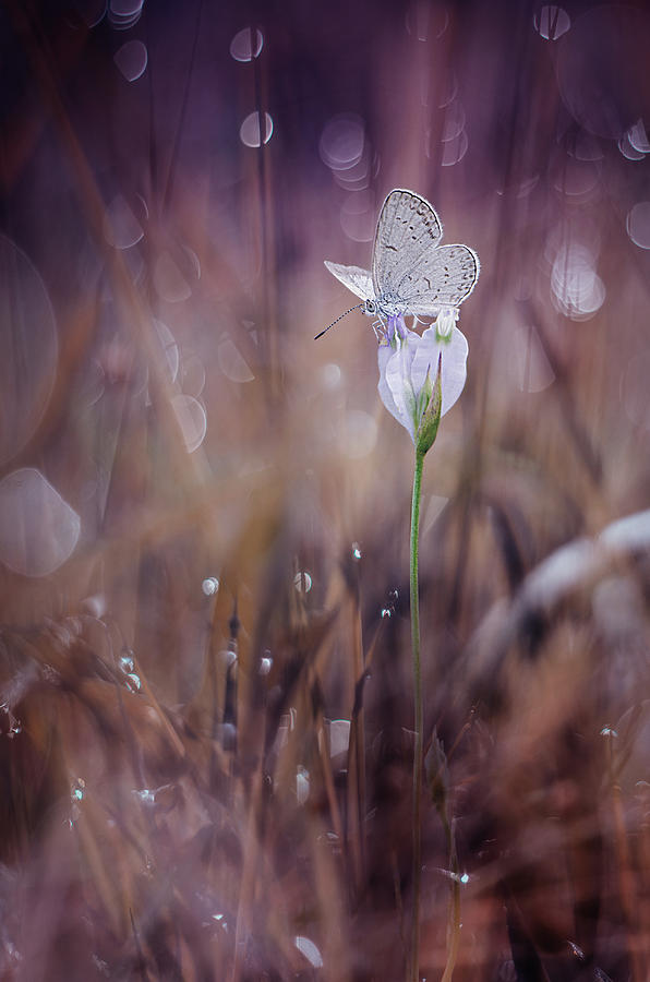 Macro Photograph - Waiting by Ahmad Baihaki