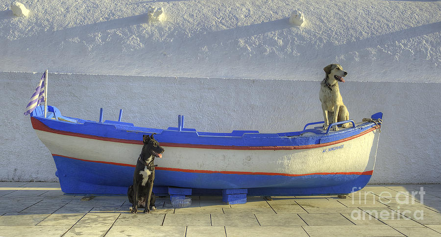 Dog Photograph - Waiting by Alex Dudley