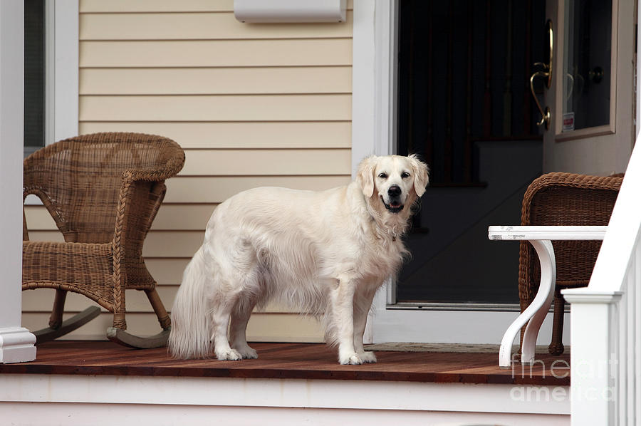 Dog Photograph - Waiting By The Door For You by John Rizzuto