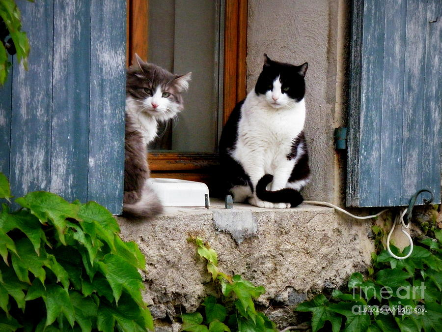 Cats Photograph - Waiting For Dinner by Lainie Wrightson
